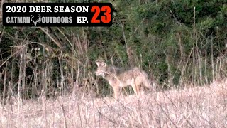 Coyote, Bobcat, and a Buck I've Never Seen Before - 2020 Deer Season Ep 23