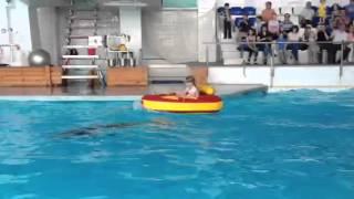 Девочка и дельфин. Набережночелнинский дельфинарий