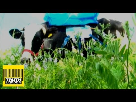 Fuel pumped from living cows - Truthloader Investigates