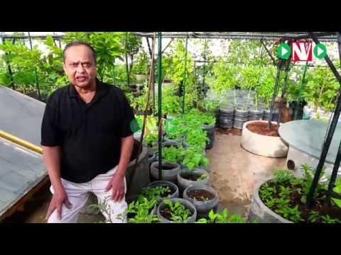 How to Start Your Organic Terrace Garden-Harish Mysore 1