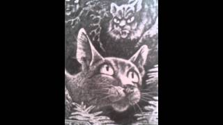 Обзор книги коты воители Голоса в ночи