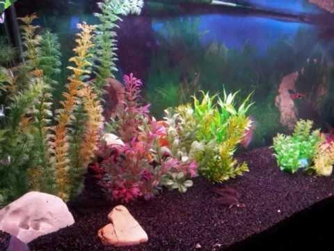 Acuario plantado artificial youtube for Peces artificiales para acuarios