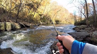 Wild TROUT Fishing with Spinners in Creek