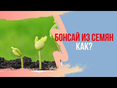 Выращивание Бонсай из семян. Бонсай с самого начала. Посадка семян