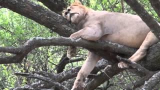 Дикие животные Африки. Озера Африки. Озеро Маньяра