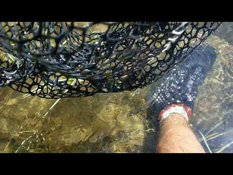Kern River Fly Fishing Report September 8, 2019