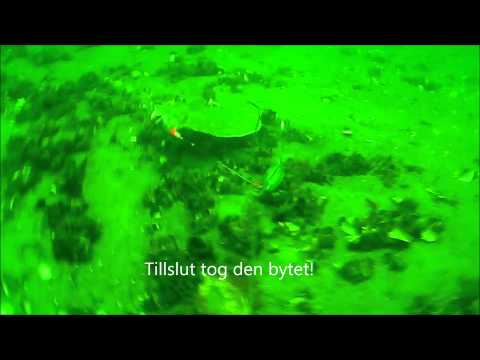 Fiske i Öresund