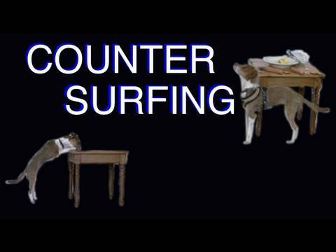 Solving Counter Surfing -  Dog Training