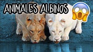 ALBINISMO EN LOS ANIMALES