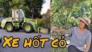 Cắt cây táo, sung vàng. Cảnh xe chuyên dụng lấy rác cỏ ở Mỹ
