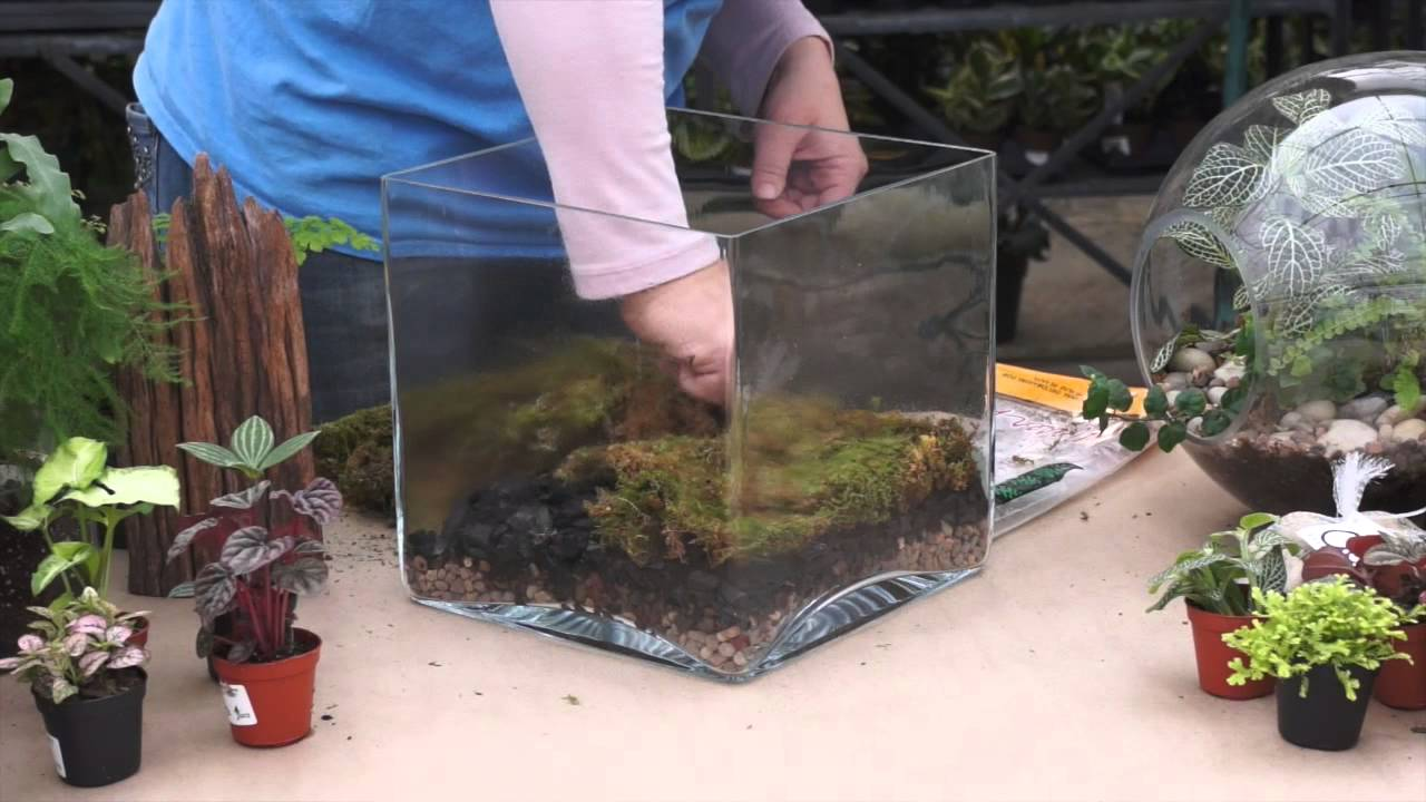 Diy Terrarium Tutorial Youtube