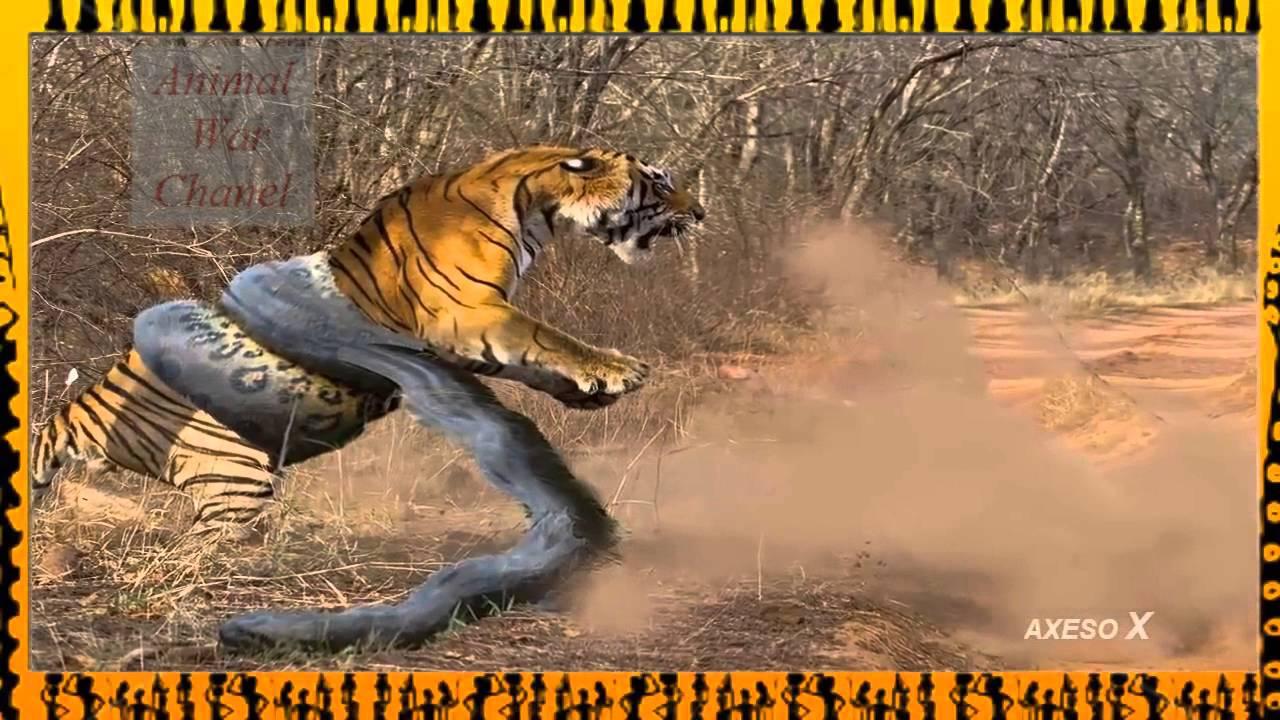 Animal War - Snake vs Crocodile - Lion vs Tiger - Tiger vs Snake Nature  Wildturtle