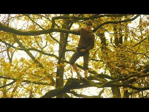 Sur un arbre perché...