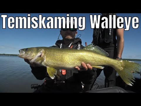 Trolling Cranks For Lake Temiskaming Walleye | Fish'n Canada