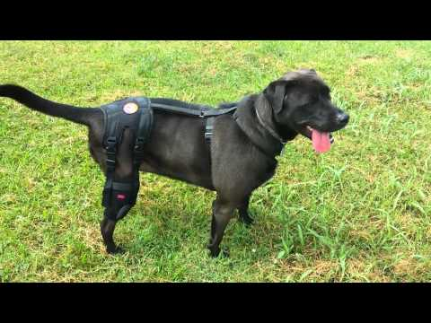 Orthodog Cruciate Care Knee Brace Review