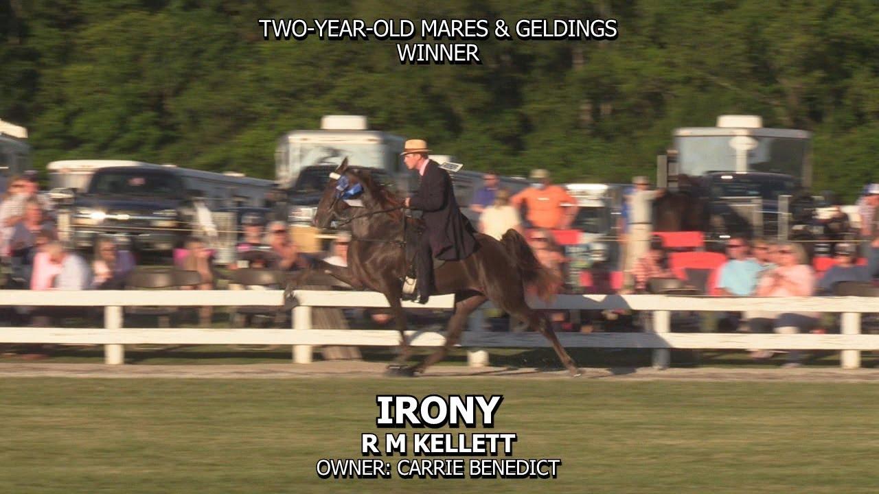 IRONY - 2020 BELFAST HORSE SHOW