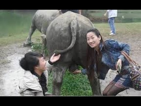 Hmoob Sib Aim Lom Zem Xav Luag Heev Li -  hmong funny clip thumbnail