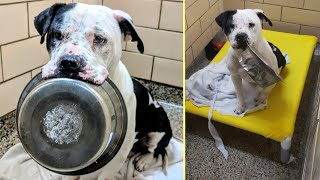 Scared Dog Won't Put Bowl Down until this Happens 😭😍 | RescueLife