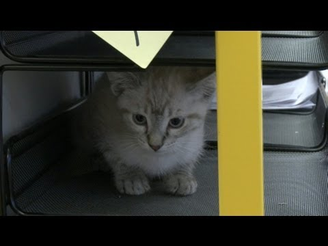 Kitten Would Rather Twerk Than Work