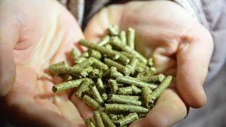 Татьяна Мецлер: Я не использую сено в кормлении кроликов
