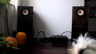 Tang Band W8-1808 with Luxman LV 105