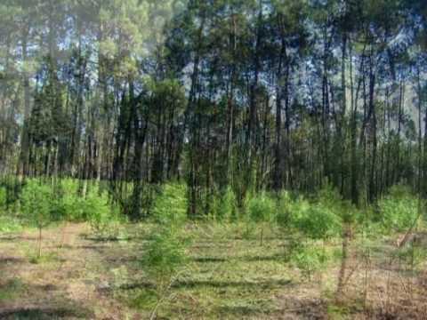 Paisagens Naturais de Corticeiro de Cima