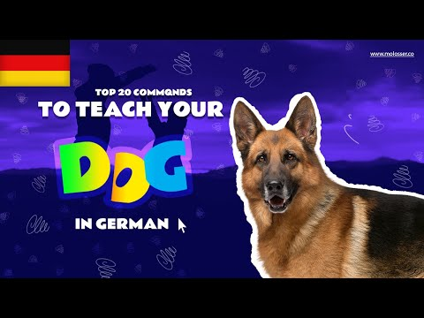 Teach Your Dog Commands In German (20 Common Words)