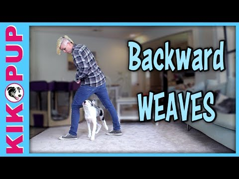 Dog Trick - Backward Weaves!