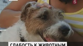 Мужчина похитил породистую собаку