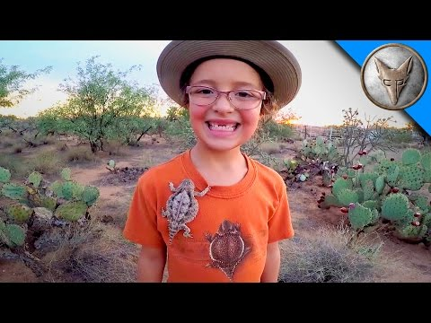 Thumbnail: Horned Lizards in Our Backyard!