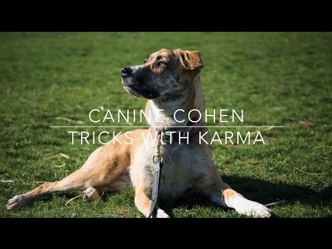 Canine Cohen: Tricks with Karma