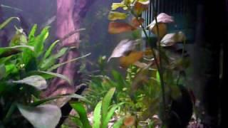 35l Aquarium (n0 6)
