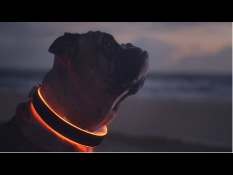 Top 5 Dog Gadgets You Must Have
