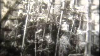Древние вымершие папоротники, хвощи и плауны