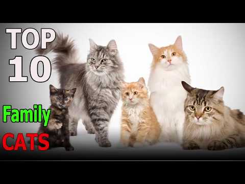 Top 10 cat breeds for Family | Top 10 animals