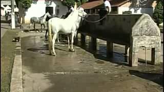 CN Notícias: Cavalos Magalarga impulsionam economia do País - 27/07/12
