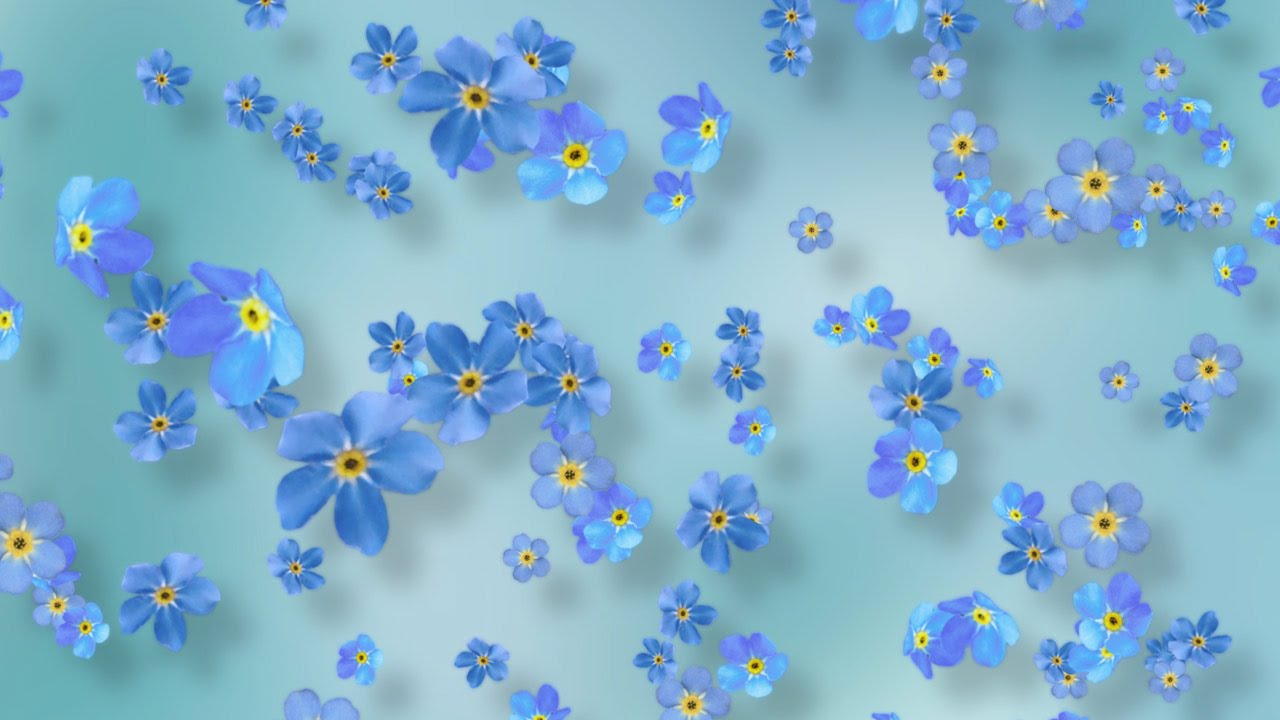 Spring Flower Background Video Blue Forget Me Nots Youtube