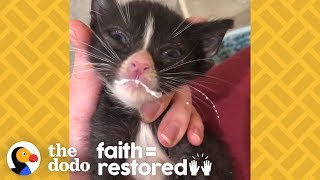Half-Pound Emaciated Kittens Grow Up To Be The Feistiest Cats | The Dodo Faith = Restored