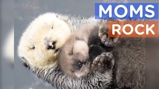 Download Video Best Animal Moms Ever | Motherly Animals Compilation | The Dodo Best Of MP3 3GP MP4