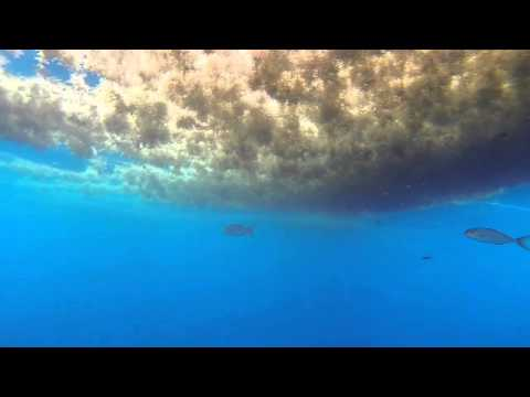 Florida Forage Fish Footage 6 15 2014