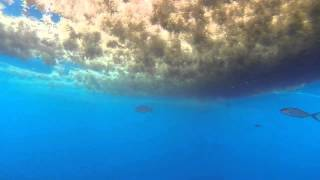 Florida Forage Fish Footage 6 15 2014