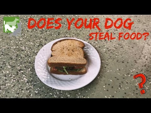"Does Your Dog Steal Food? | ""Counter Surfing"""