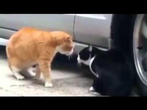 Как отучить кошку гадить? -