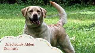 World Class Dog Kennels, Pet Resort, Crystal Lake, Il.