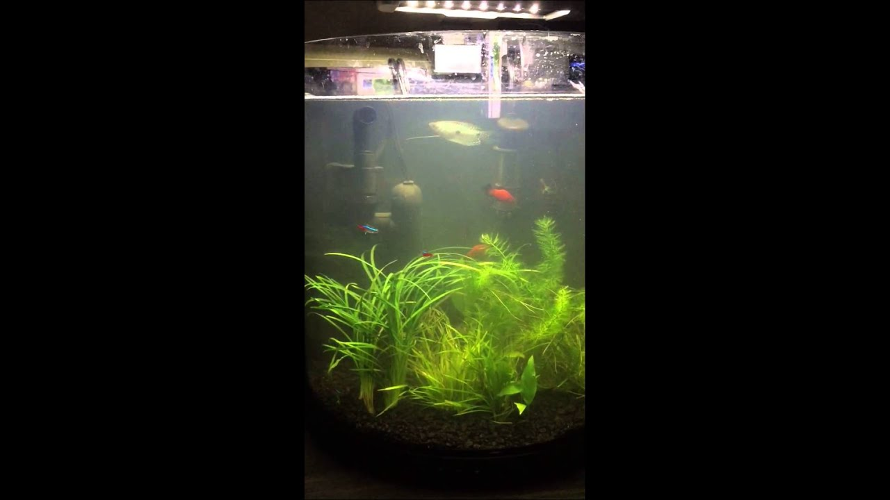 Fish Tank Help : Why wont my fish tank clear up? HELP! - YouTube