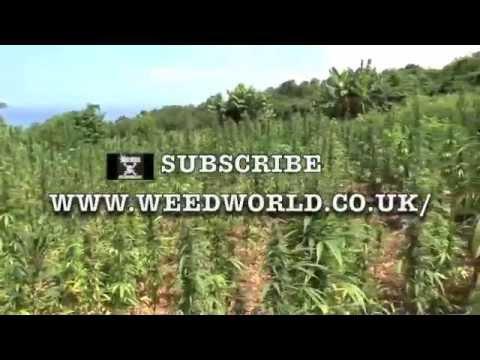 Weed World Magazine   Negril, JAMAICA