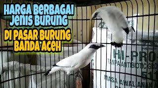 Survei harga berbagai jenis burung di pasar burung banda aceh 2019