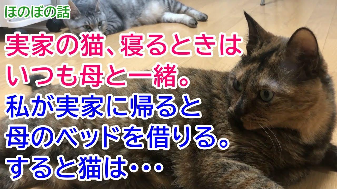【猫のほのぼの話】実家の猫、寝るときはいつも母と一緒。私が実家に帰ると母のベッドを借りる。すると猫は・・・