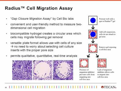 Increased Confidence of Wound Healing Assays by Assessing Cell Migration and Cell Viability