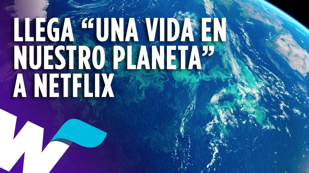 David Attenborough Una Vida En Nuestro Planeta Llega A Netflix Y Más Noticias De Espectáculos Youtube